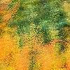 Tapeten: Herbstfarbenrausch 3