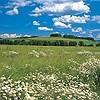 Tapeten: Meadow