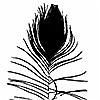 Tapeten: peacock feather