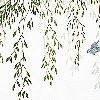 Tapeten: peace of garden 02 1448033849