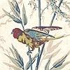 Tapeten: Great Ormond St., Parchment