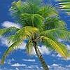 Tapeten: Ari Atoll