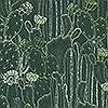 Tapeten: Cactaceae, col. 09