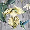 Tapeten: Trailing Orchid, col. 2