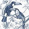 Tapeten: Birds Song, col.02