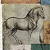 Tapeten: Studi Equestri