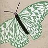 Tapeten: Farfalla, col. 03