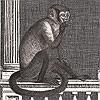 Tapeten: Procuratie e Scimmie, col.04