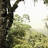Tapeten: Dschungel