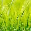 Tapeten: Green 2