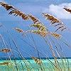 Tapeten: Ocean Breeze