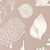 Tapeten: Shells - Rose