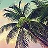 Tapeten: Miami