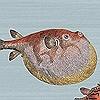 Tapeten: Acquario, col.30