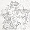 Tapeten: Baroque, Grey