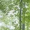 Tapeten: Trees in Forest