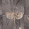 Tapeten: Wings, col.03