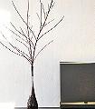 Adna,-col.10-Blätter-Florale-Muster-Grau-Creme