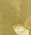 Balbina,-col.01-Blumen-Florale-Muster-Gold-Creme