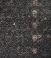Balmoral,-motif-Karos-Stoff-Moderne-Muster-Braun