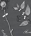 Botanicals,-pearl-grey-Blumen-Blätter-Florale-Muster-Grau-Anthrazit-Weiß
