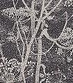 Cow-Parsley-No.-48-Blumen-Florale-Muster-Anthrazit-Creme