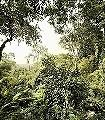 Dschungel-Bäume-Blätter-Großmotiv-FotoTapeten-Grün-Braun-Weiß