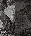 El-Caballo-de-Andy,-col.01-Tiere-Moderne-Muster-Grau-Anthrazit-Weiß