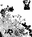English-Garden,-bw-Blumen-Schwarz-Weiß