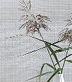 Fedder,-col.50-Naturfaser-Geflecht-Textil-&-NaturTapeten-Creme