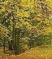Herbstwald-Bäume-FotoTapeten-Braun-Orange
