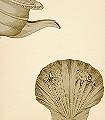 Iduna,-col.42-Gegenstände-Klassische-Muster-Gold-Creme