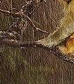 Jungle-Blumen-Tiere-Landschaft-Blätter-Äste-Fauna-Florale-Muster-FotoTapeten-Multicolor