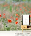 Juniwiese-1-Blumen-Landschaft-Gras-Fauna-FotoTapeten-Rot-Grün