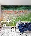 Juniwiese-2-Blumen-Landschaft-Gras-Fauna-FotoTapeten-Rot-Grün