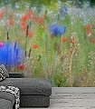 Juniwiese-3-Blumen-Landschaft-Gras-Fauna-FotoTapeten-Rot-Grün