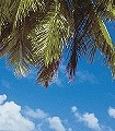Maledives-Bäume-Strand-FotoTapeten-Grün-Türkis-Creme