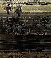 Memories,-col.01-Streifen-Bäume-Großmotiv-FotoTapeten-Grau-Braun-Schwarz-Creme-Hellbraun