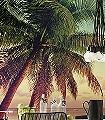 Miami-Bäume-Landschaft-Strand-FotoTapeten-Orange-Rosa-Türkis