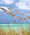 Ocean-Breeze-Strand-FotoTapeten-Blau-Türkis-Creme