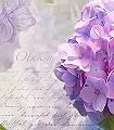 Otaksa-Blumen-FotoTapeten-Blau-Lila-Weiß-Flieder