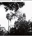 Palermo-Bäume-Landschaft-Äste-Großmotiv-Schemen/Silhouetten-Florale-Muster-Moderne-Muster-FotoTapeten-Schwarz-Weiß-Schwarz-und-Weiß