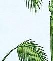Palm-Leaves,-col-10-Blätter-Vintage-Tapeten-Moderne-Muster-Grün-Hellblau