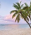Paradise-Morning-Strand-FotoTapeten-Grün-Rosa-Hellbraun