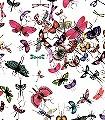 Paula-Zeichnungen-Schmetterlinge-Fauna-Weiß-Multicolor