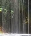 Rainbow-Blätter-Regenbogen-FotoTapeten-Grün-Multicolor