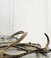 Sari,-col.01-Streifen-Stoff-Moderne-Muster-Grau-Weiß