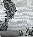 Seahorse,-col.01-Tiere-Unterwasserwelt-Fauna-FotoTapeten-Grau-Anthrazit-Weiß