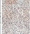 Stardust,-MCM-Punkte-Moderne-Muster-FotoTapeten-Multicolor