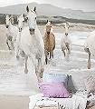 White-Horse-Tiere-Strand-FotoTapeten-Weiß-Creme